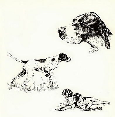 Old Vintage POINTER DOG Bird Hunting Art Print Hunters Gift Matted 10x8