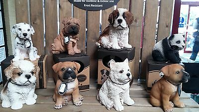 Puppy Dog Pet Ornament Figurine in Gift Box 18 Breed Types Indoor or Garden