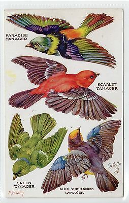 BIRDS ON THE WING - SERIES II: Pop-out postcard (C13284)