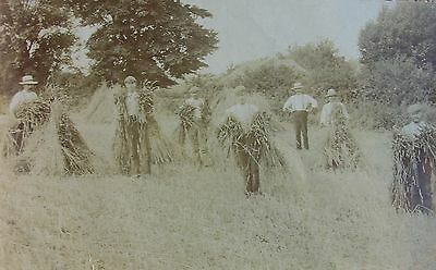 """Albert """"bosses The Show"""" During Fifield Harvest Oxfordshire 1916 Rp Pc"""