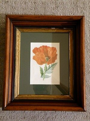 Old Antique Victorian Shadow Box Type Picture Frame With Print & Glass POPPY