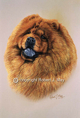 Chow Chow Print by Robert J. May