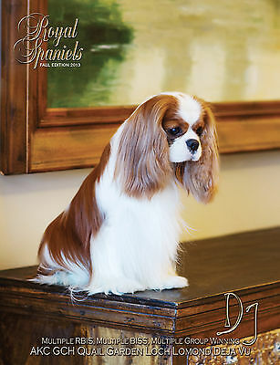 Beautiful Cavalier King Charles and English Toy Spaniels ~Must See~ Book Fall'13