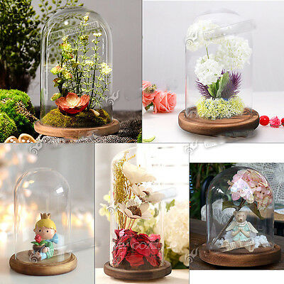 Glass Display Bell Jar Dome With Wooden Base DIY Transparent Christmas Decor UK