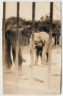 Picture postcard of elephants at Lee Gardens, Hong Kong (C21799)