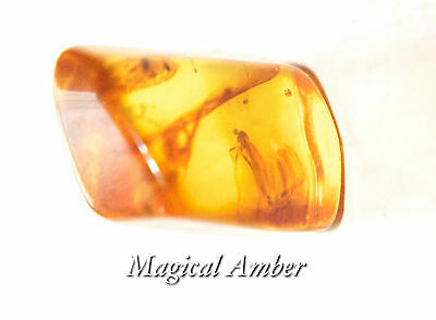 Baltic Amber With Insect