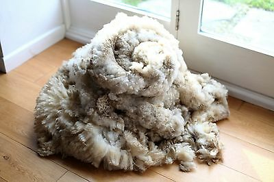 1955g Rare Raw Clun Forest Sheep Wool Fleece Fibres