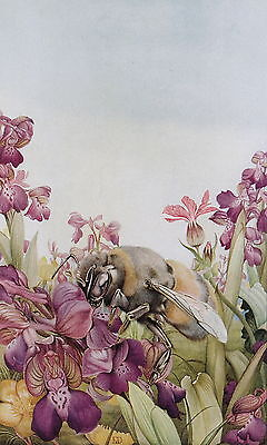 Vintage Maurice Edward Detmold Art Print Wildlife Orchis Orchid Insect Bumblebee
