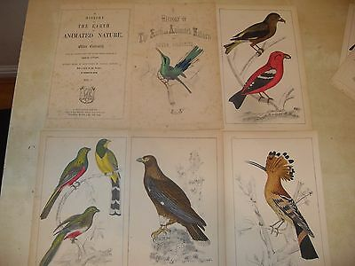 antique engraving prints birds earth animated nature Oliver Goldsmith
