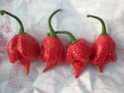 (25) TRINIDAD SCORPION Hot Pepper Seeds  *******Promotional Offer********