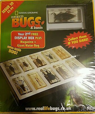 National Geographic Real-life Bugs & Insects magazine Issue 10 Brand New