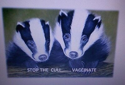 Badgers  Stop The Cull.