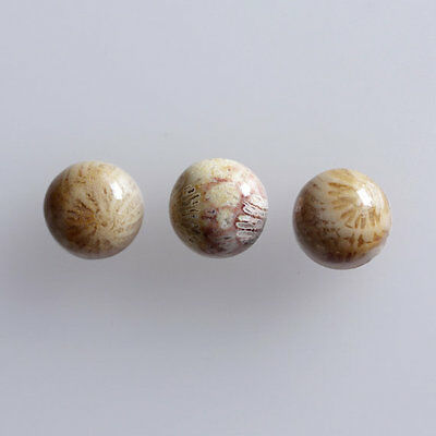 25MM Round Shape, Fossil Coral Calibrated Cabochons AG-236