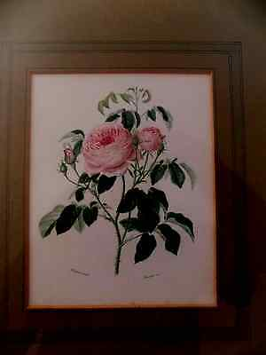 Vintage Print of Roses by Maubert pinx, Framed by Whitehead & Mangan