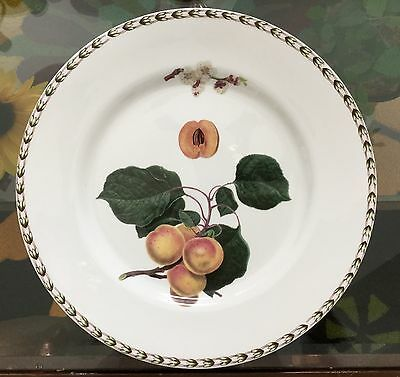 NEW!!!  Queen's HOOKERS FRUIT Apricot Dinner Plate Bone China ~~ NOS!!!