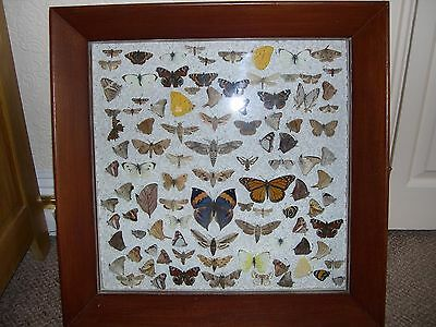 Large Box Frame Of Over 100 Genuine Butterfly And Moth Specimens