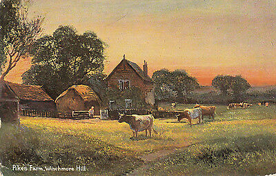 Old  P/c  Pikes Farm, Winchmore Hill, Buckinghamshire, 1907  Cattle