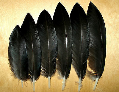 6+Genuine Icelandic BEAUTIFUL small raven wing feathers(Common raven)