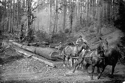 Logging, State of Oregon, Late 1800's, Skidding Trees with Horses, Old Photo