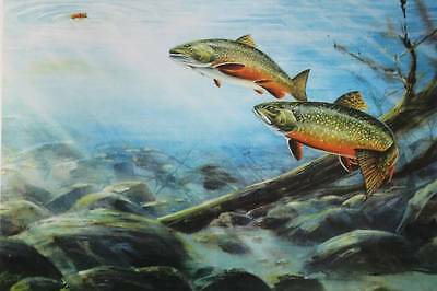 Under Water Clear Steam Trout vintage art