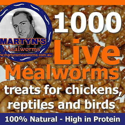 1100 Live Mealworms (220g) - High Protein Treat - Express Post Australia Wide