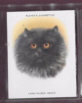 Players Cats Number 19