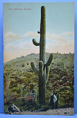 The Suhuara Cactus Postcard - Unused