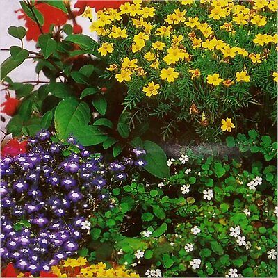 BALCONY MIX (Annual Flowers) 30 seeds (#1597)