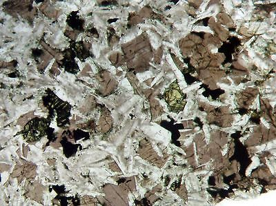 Tranquilityite lunar meteorite mineral Australia THIN SECTION Awesome structure