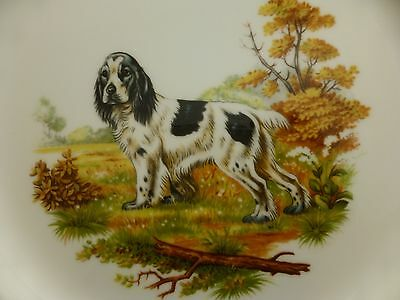 Crown Staffordshire English Springer Spaniel Display Plate - Old - Unused Cond