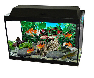 "24"" Eurokit- 50Ltr Aquarium Starter Kit 24 x 12 x 12"" Built in LED Lighting"