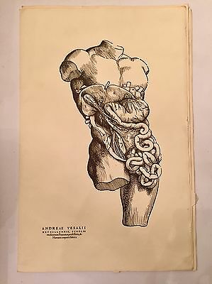 Vintage Andreae Vesalii Lithographs Medical Drawing Roche Laboratories Oddities