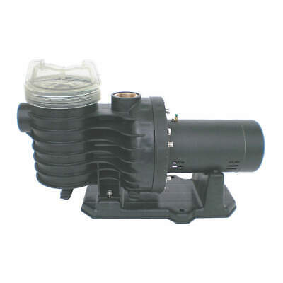 DAYTON Pool Pump,3/4HP,3450,115/230V, 5PXE3