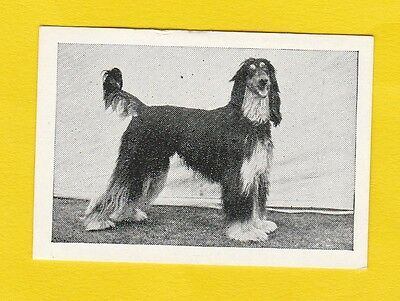 Dogs  -  Candy Novelty  -  Scarce  Dogs  Card  -  Afghan  Hound  -  1953