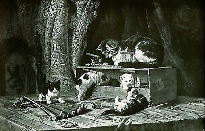 Old Antique RONNER KNIP Art Print Mother Cat Kitten Play in Box NEW TENANTS