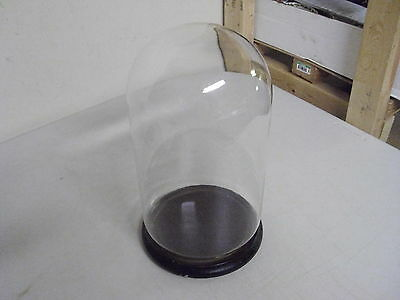 Glass Dome + Wood Base 10 3/4 Inches High