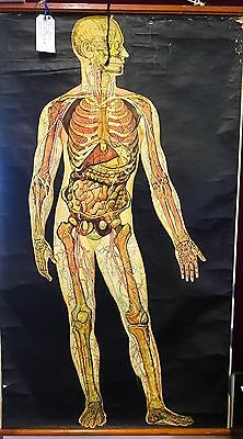 Antique Dutch Anatomical Medical Training Print On Linen
