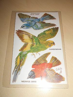 EARLY TUCK OILETTE POP OUT PC - BIRDS ON THE WING - BUDGERIGAR etc - VGC