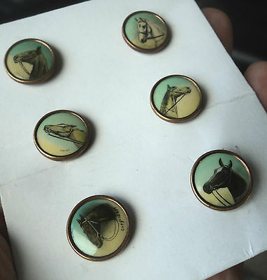 Vintage Set Of 6 Equestrian / Horse  / Hunting Buttons c.1930