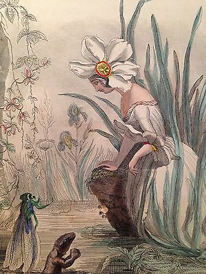 From Flowers Personified Steel Engraving-Daffodil- 1847