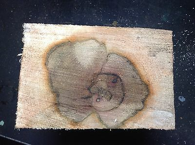 Spalted Sycamore Turning Wood