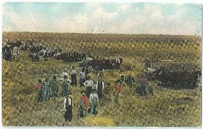 Farm Workers in the Field Antique Postcard Divided Back