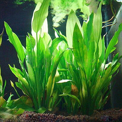 Fish Tank Aquarium Decors Green Plastic Water Grass Plant Ornament Eyeable Nice