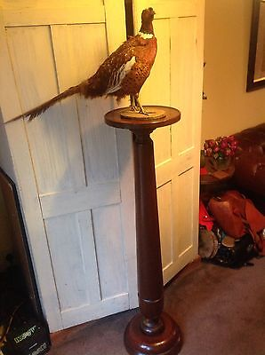 Large Antique Plant Stand, Torchere, Mahogany? Pheasant Not Included!!