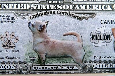 Chihuahua dogs FREE SHIPPING! Million-dollar novelty bill