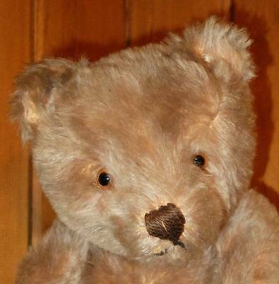 'SNOOPIE' ADORABLE OLD STEIFF BEAR with button in ear 1950's