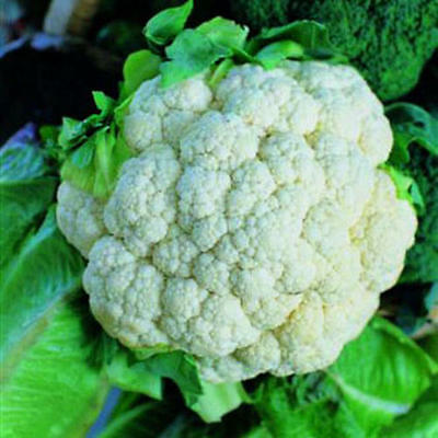 Organic Early Snowball Cauliflower Seed 100ct Excellent flavor USA Produced