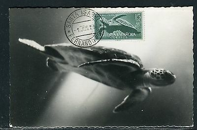 Guinée Espagnole - Carte maximum Tortue  en 1955