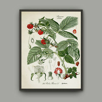 Canvas Print Wall Art Pictures Medical Plant Green Home Decor Vintage Poster
