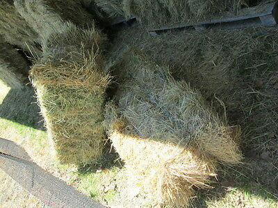 Grass Hay, Meadow Hay , Small Square hay bales for sale.